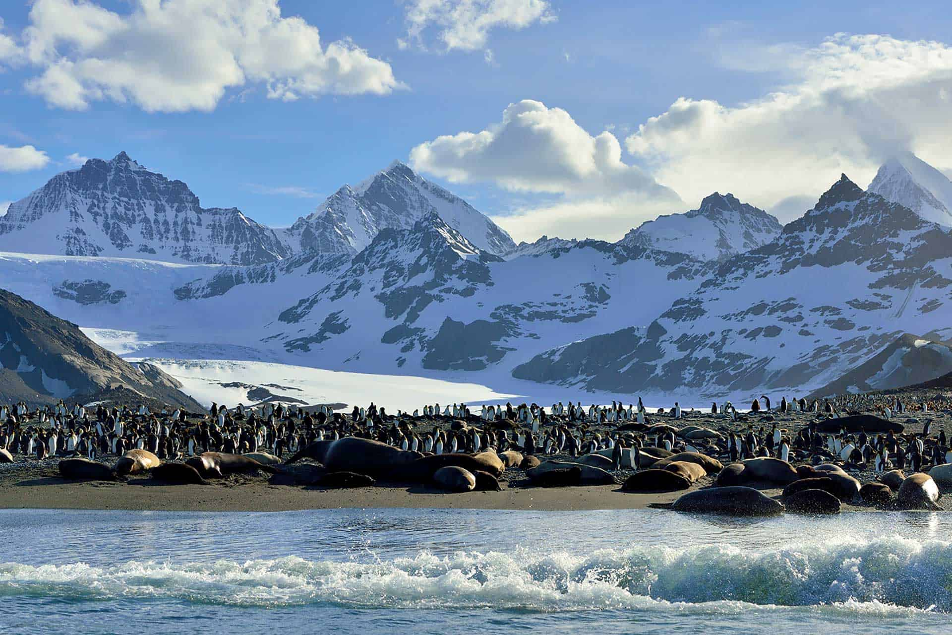 Elephant Seals and King Penguins, St Andrews Bay